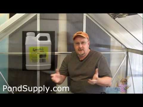 Beneficial Bacteria For Your Pond