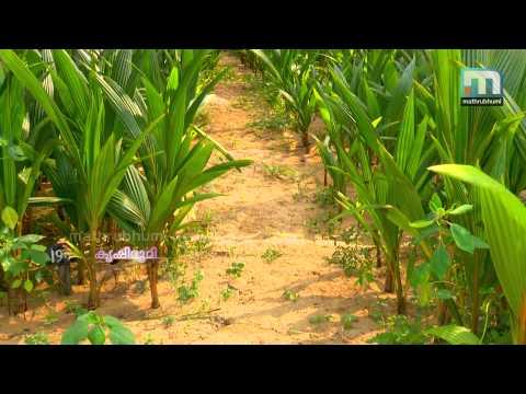 Kuttyadi Coconut To South Kerala - Krishibhumi Roundup (Episode 03)