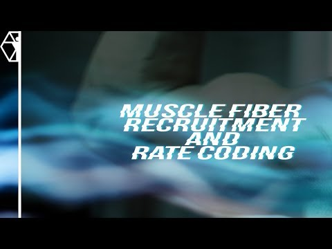 Nervous System Training | Rate Coding and Muscle Fiber Recruitment