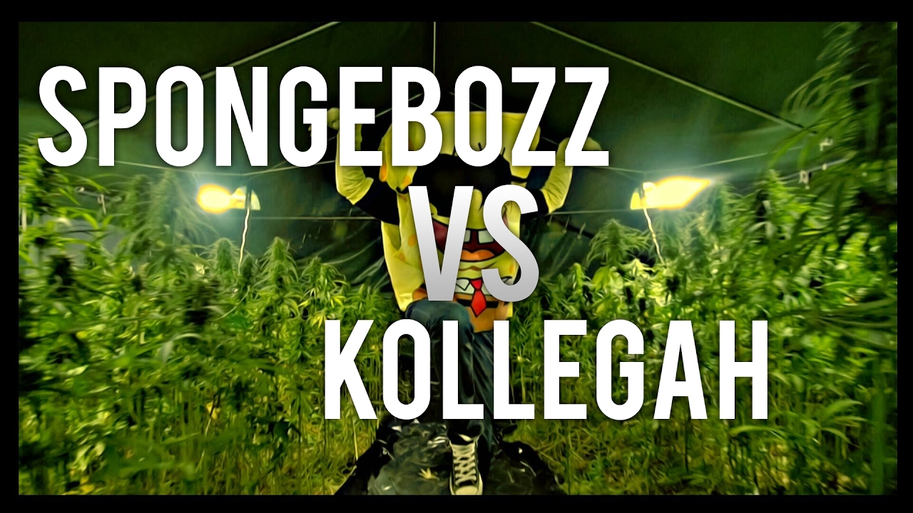 Spongebozz Kollegah