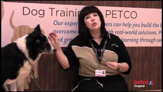 Christmas Tree Safety For Your Dog - Petco Pet Tips With Fanna Easter