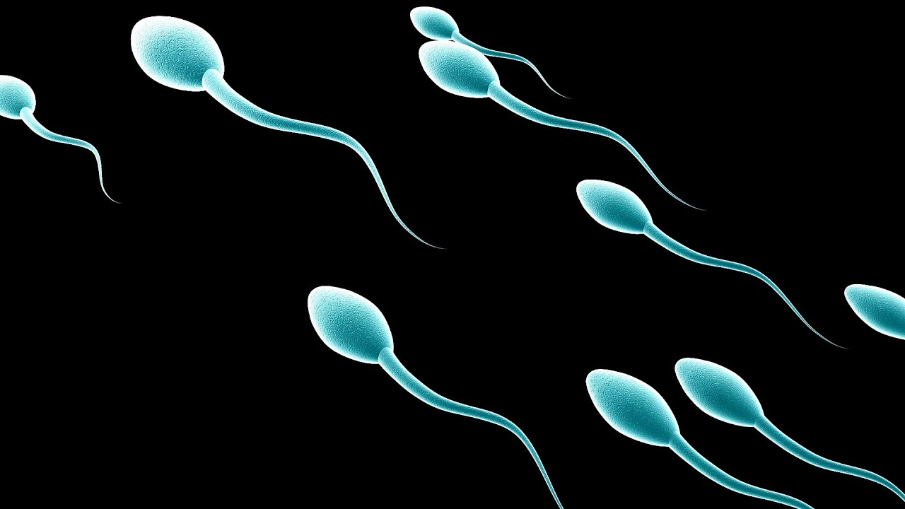 or description cells sperm Definition of