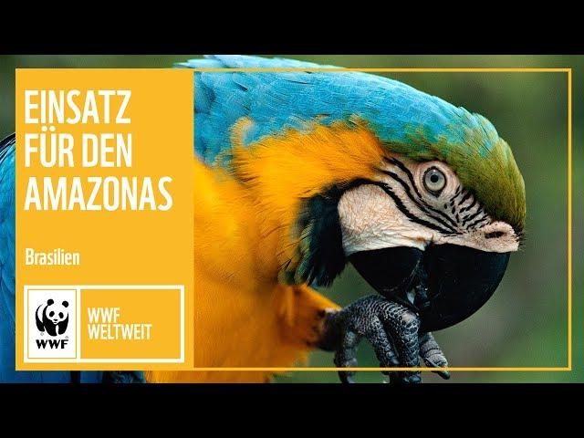 Brasilien: Einsatz für den Amazonas | WWF Weltweit | WWF Deutschland