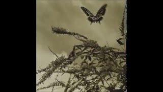 奥田美和子 - はばたいて鳥は消える
