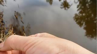 Câu cá rô đồng trúng lớn, không kịp móc mồi - Phần 3 thumbnail