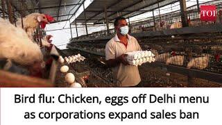 Bird flu: Chicken, eggs off Delhi menu as corporations expand sales ban