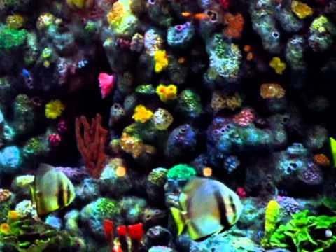 Heron Tower London England Beautiful Huge Aquarium Tropical Fish Big Enough Ron - Phil in Bangkok