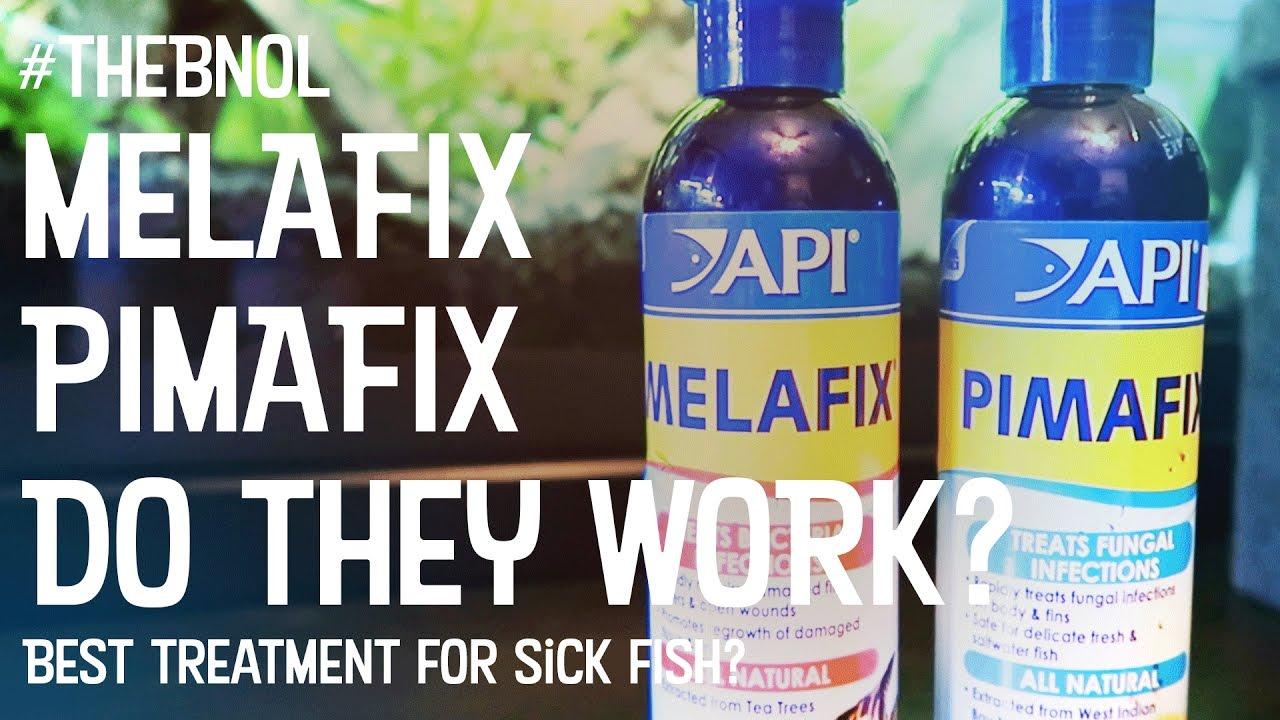 Melafix - Pimafix - Does it work? Treating sick fish - My Experiences |  Bear Necessities