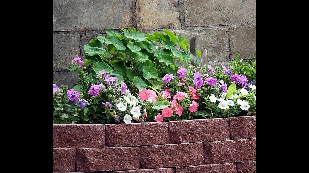 Ideas de borde de jard n de ladrillo youtube for Jardines pequenos con ladrillos