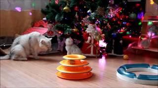 Самый милый новогодний ролик с котятами