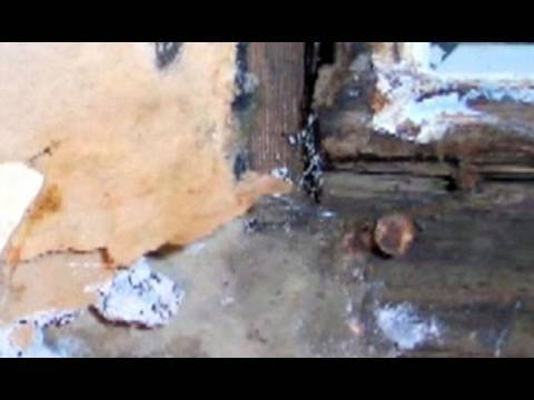 Mould Growing in Your Home