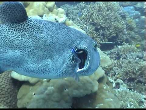 Cleaning station cleaner wrasse