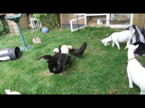 Joepie op bezoek bij de konijnen