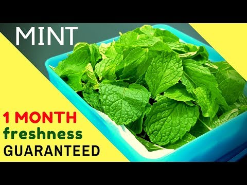 How to Store Pudina/Mint leaves for 1 MONTH I Preserve Pudina/Mint leaves