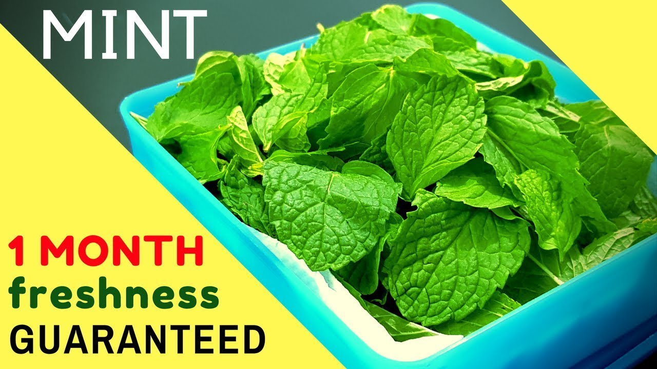 how to store pudina mint leaves for 1 month i preserve pudina mint leaves youtube. Black Bedroom Furniture Sets. Home Design Ideas