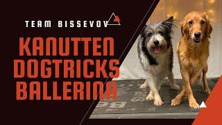 Amazing dogtricks by golden retriever - Team Bissevov