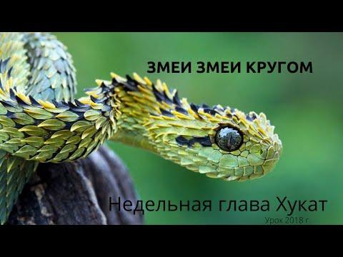 Недельная глава Хукат. Змеи, змеи кругом. Бемидбар 20. Запись 2018 г.