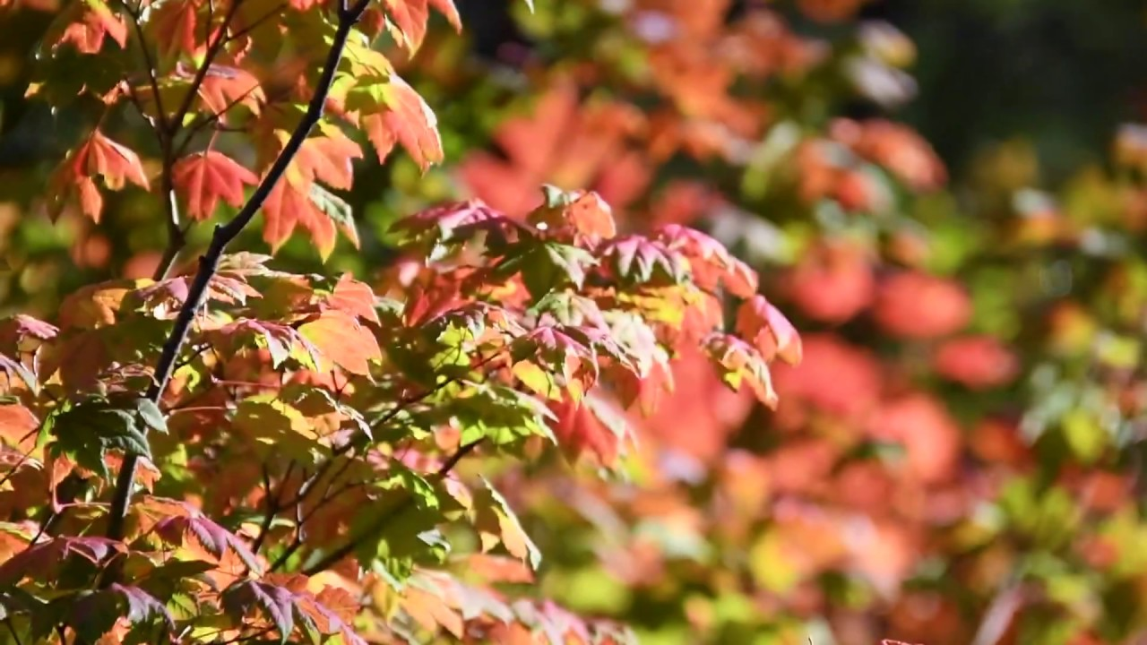 Seattle Adventures: An Autumn Day In Snoqualmie