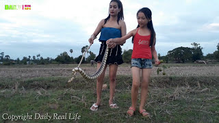 Amazing Two Beautiful girls  Catch Village Snake Near Buffalo - How to Easy Catch Snake My Country