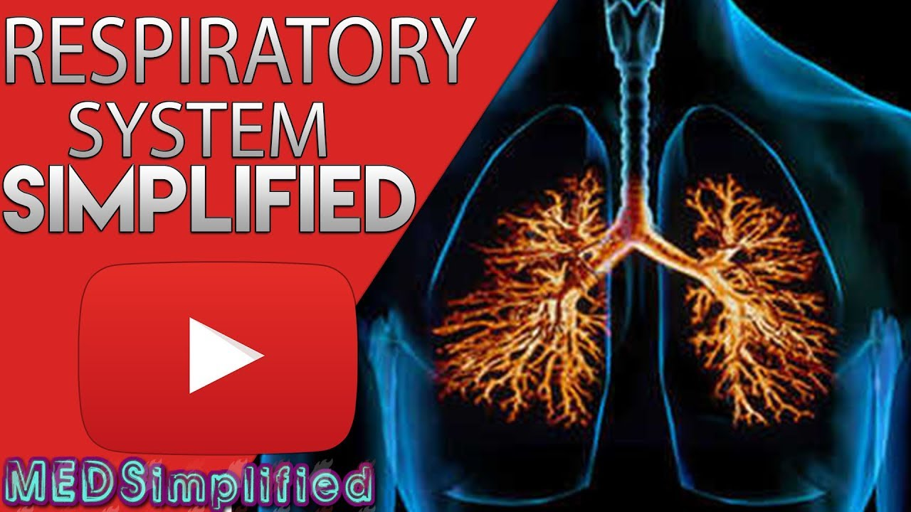Respiratory System Made Easy Youtube