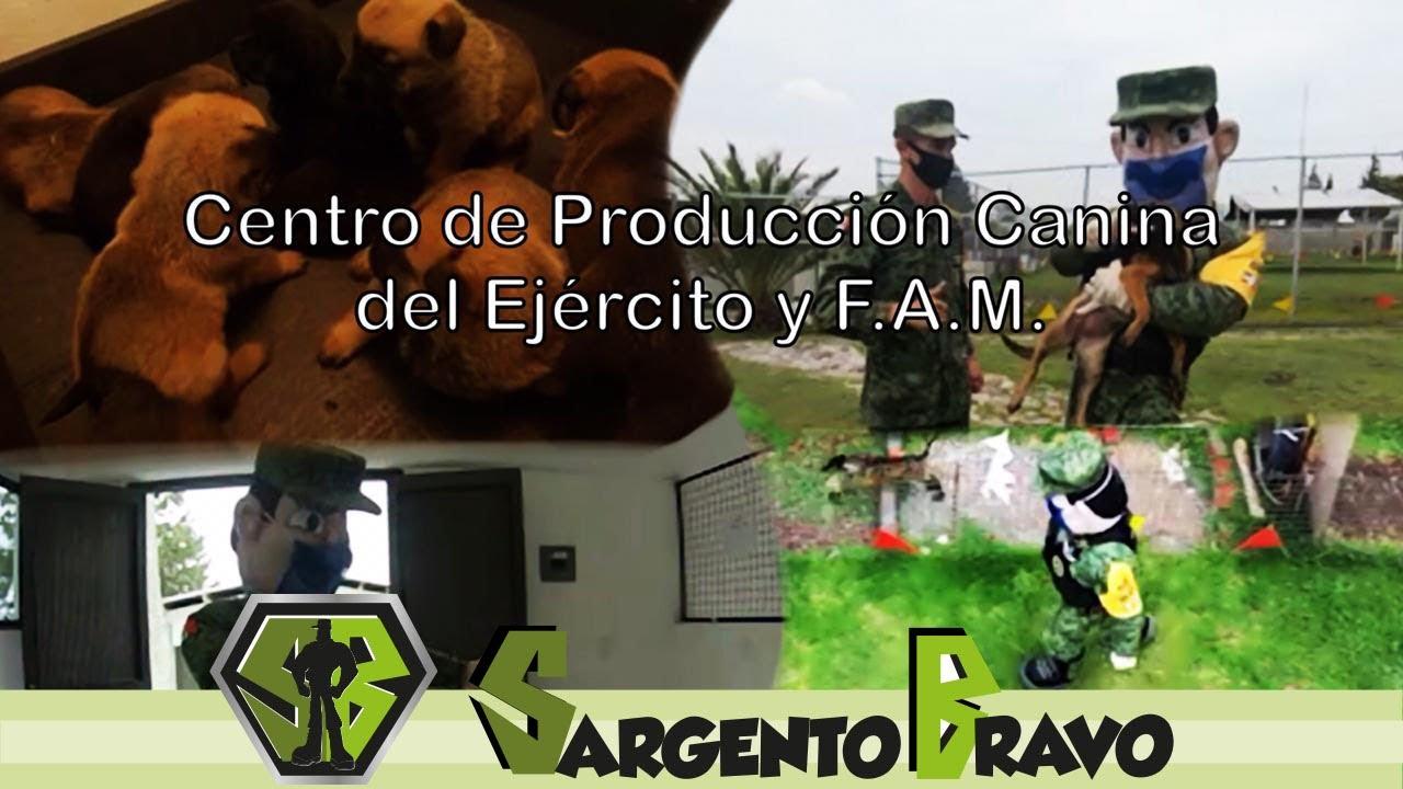 El #SargentoBravo te invita a conocer el Centro de Producción Canina del #EjéMx y #FAMx
