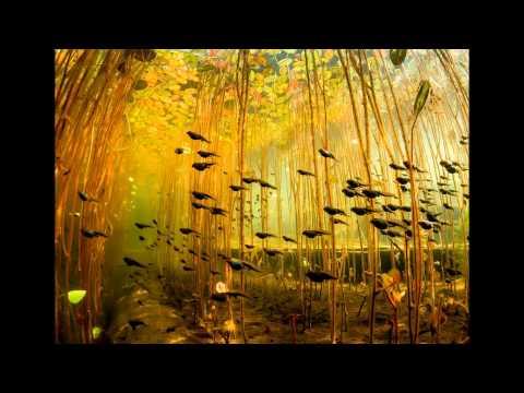 Snatam Kaur - By Thy Grace - Under The Pond
