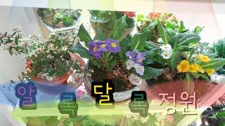 알록달록 베란다/3월24일 베란다정원