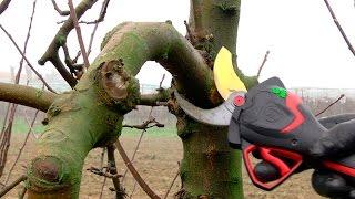 ELECTROCOUP F3015 INFACO + PW2 en Arboriculture FR