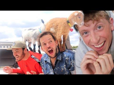Vlog Squad Tries Goat Yoga!!