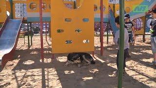 Собаки обосновались на детской площадке
