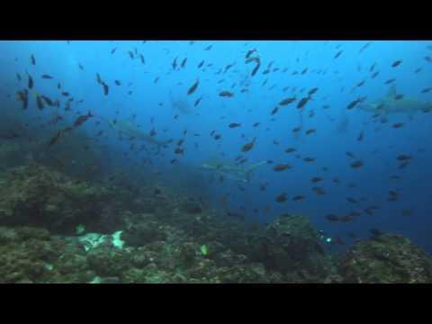 Galapagos Sky July 2014 Hammerheads 1