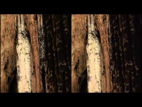 3-D Video