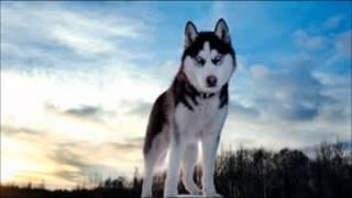 Meine Top 10 der besten Hunderassen