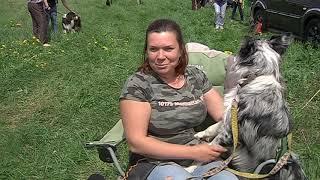 В Курской области протестировали собак на годность пастушьей службе