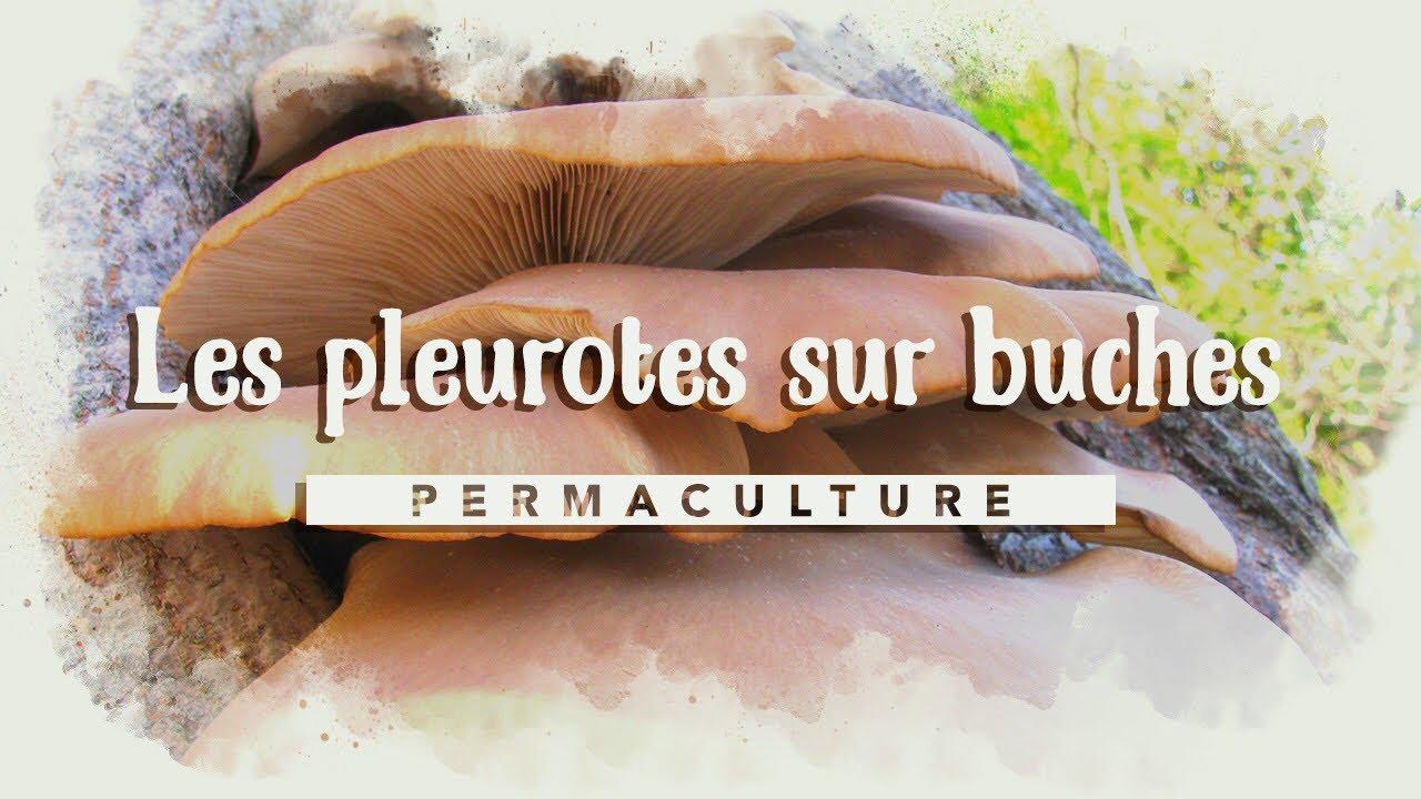 champignons sunt paraziți în du bois