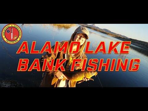 Alamo Lake Fishing  Multi species 2017  Pt  2