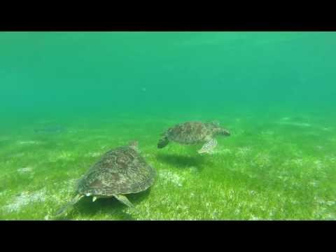 Snorkeling the Maldives GoPro Video