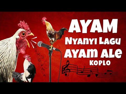 Download AYAM NYANYI LAGU MACAM - MACAM AYAM I AYAM ALE