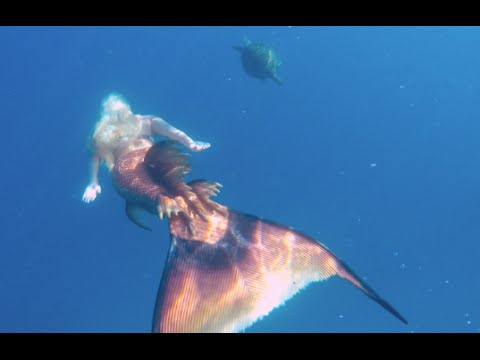Life as a mermaid: Professional Underwater Performers ...