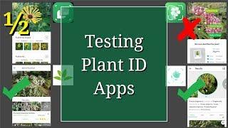 Testing Plant ID Apps