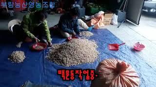 2019 국산한약재 햇맥문동 도매작업 베트남인력