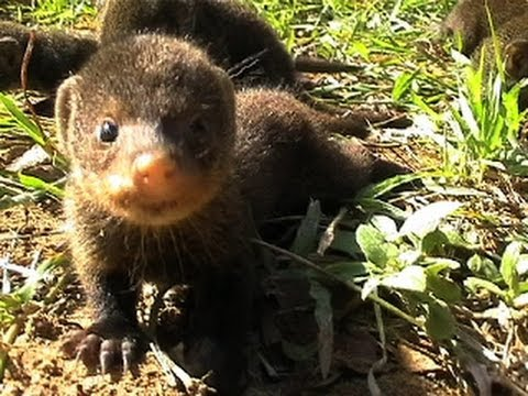 South african baby animals - photo#28
