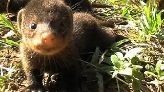 Animals - cute little baby mongoose - at Sodwana Bay South Africa