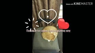 Ода любви. Наглый и рыжий кот Филюша. История одного любителя спать и есть)