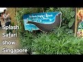 Splash Safari Show Singapore Zoo   Sea Lion   Travel   Visit   VBO Vlogs   Adventure   Thrill   2017