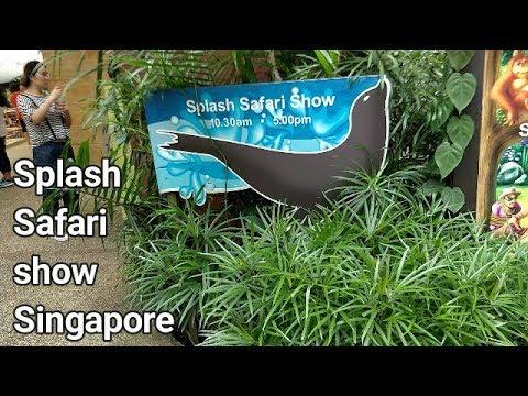 Splash Safari Show Singapore Zoo | Sea Lion | Travel | Visit | VBO Vlogs | Adventure | Thrill | 2017