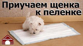 Как приучить щенка к пеленке? Щенок и туалет!