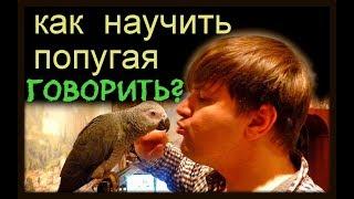 #Как_НАУЧИТЬ_попугая_ГОВОРИТЬ? #How_to_TEACH_a_parrot_to_TALK ?