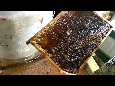 Подробный обзор медогонки автомат от Пчелотехники