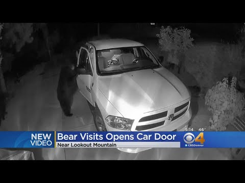 Channel 93.3 Blog - Bears caught on camera in Lookout Mountain